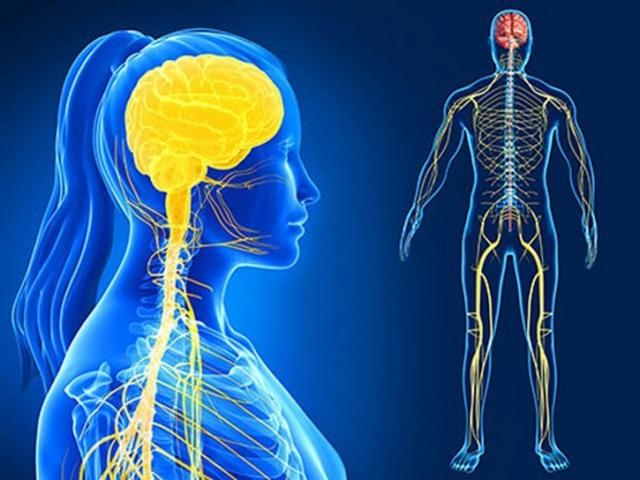 Quanto você sabe sobre o Sistema Nervoso? (nível médio)