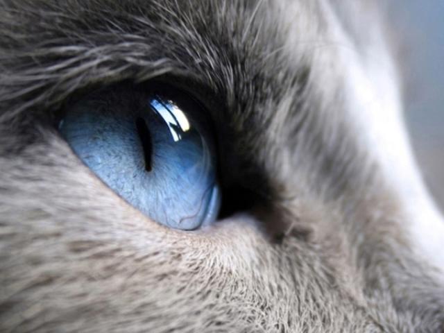 Você tem a visão de qual animal?