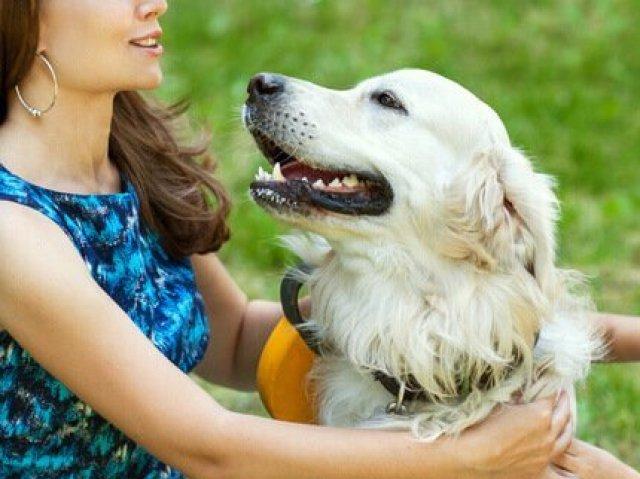 Seu cachorro te ama?