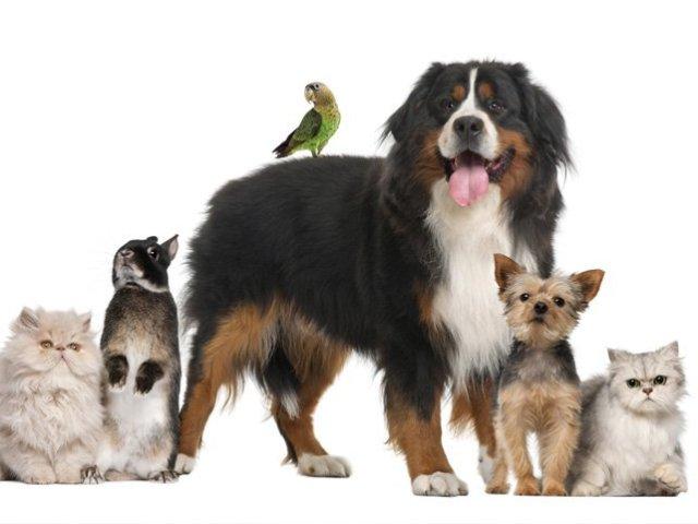 Que Espírito de Animal Doméstico você tem?