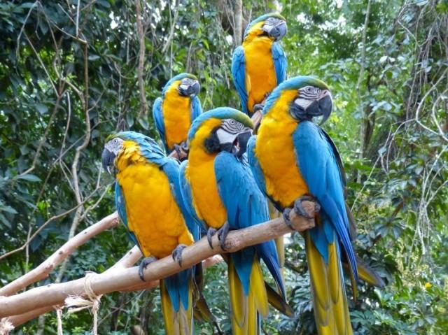 Qual ave você seria?