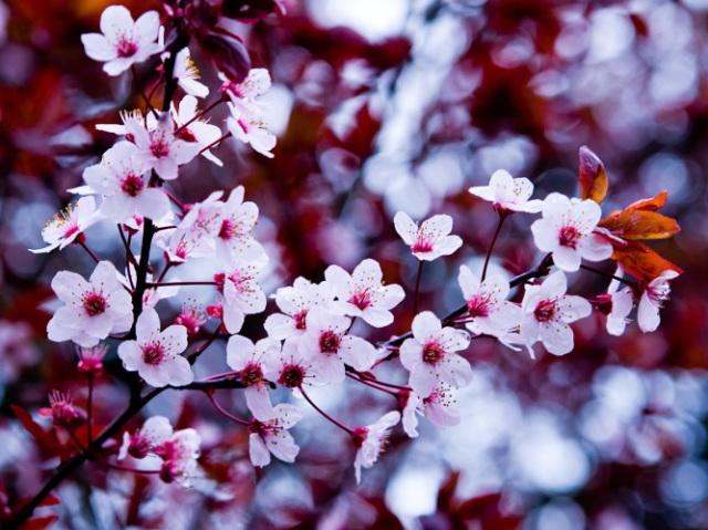 Qual flor mais combina com a sua personalidade?