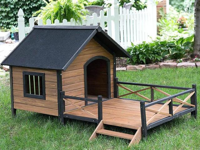 Qual é a sua casinha de cachorro?