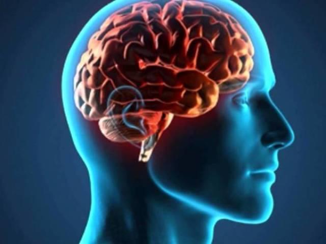 Você realmente conhece o cérebro humano?