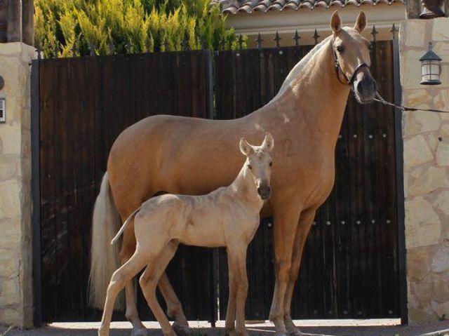 Qual cavalo você teria?