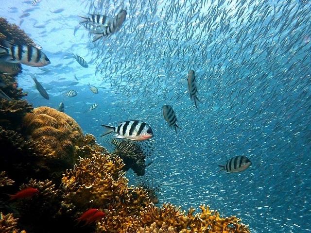 Qual animal marinho você seria?
