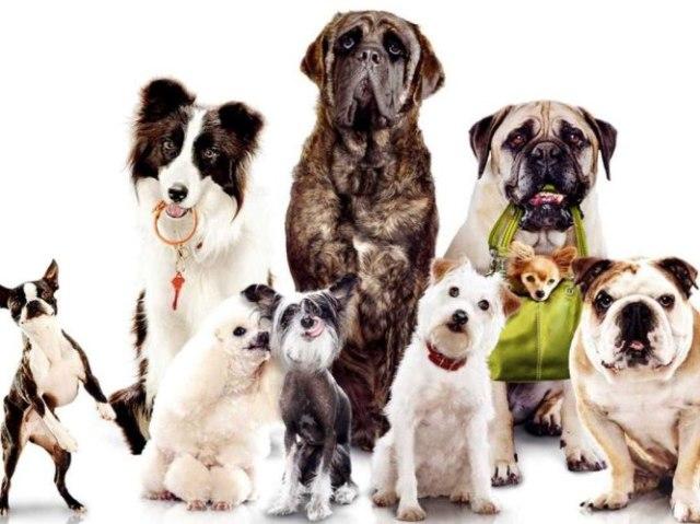 Que tipo de cão você seria?