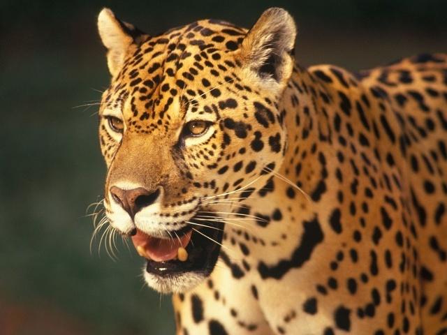 Quiz: Curiosidade sobre os animais