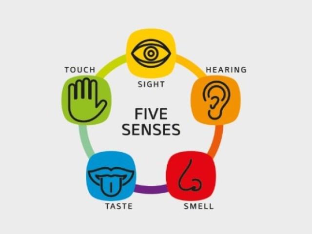 Qual dos 5 sentidos predomina em você?