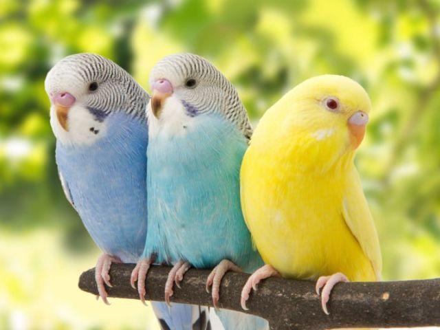 Testes seu conhecimento sobre aves!