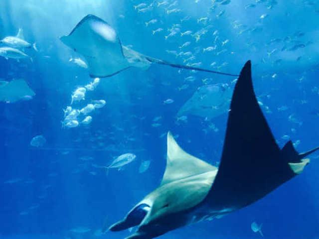 Teste sobre os animais marinhos