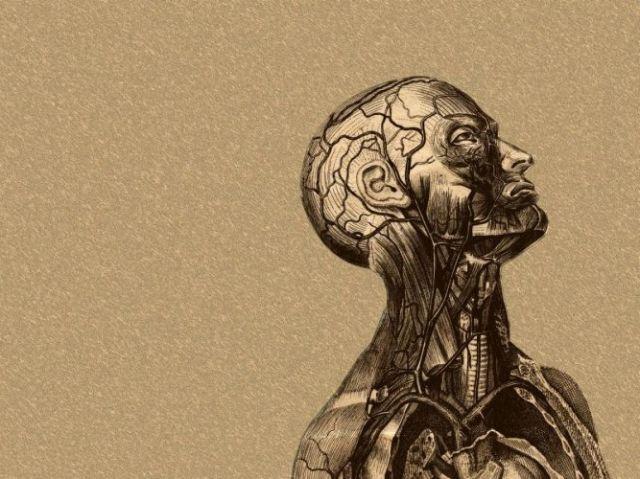 Teste Sobre o Corpo Humano!