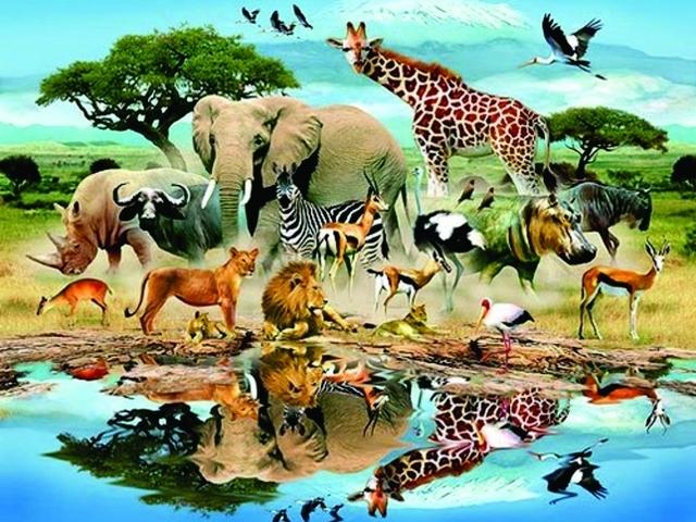 Animais Vertebrados E Invertebrados Quizur
