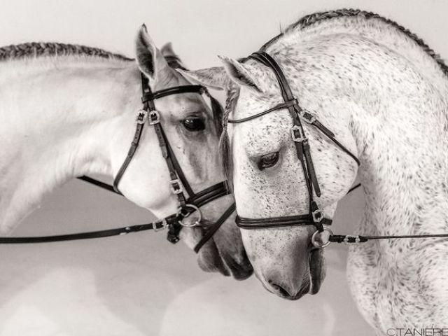 Você consegue descobrir essas raças de cavalos?