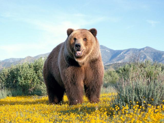 Que tipo de urso você é?