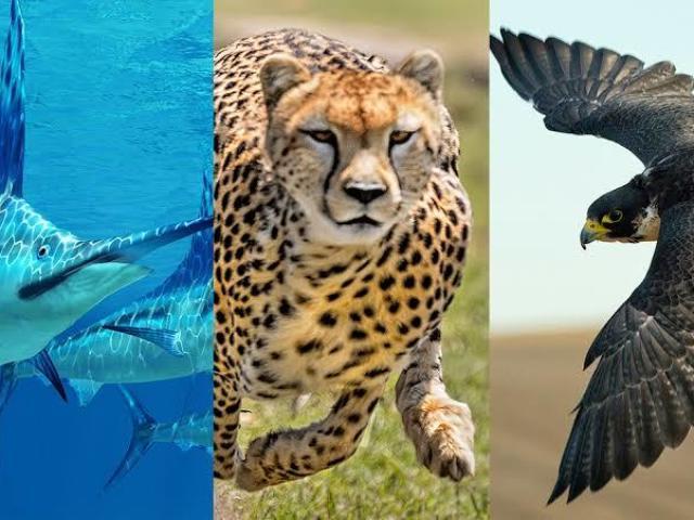 Se você fosse um animal qual seria?