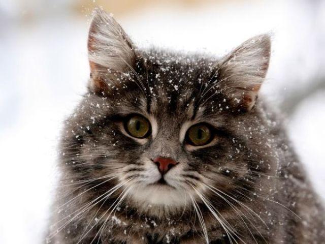 Qual é o tipo de gato ideal para você?