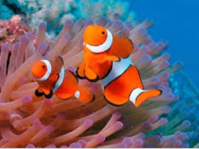Que animal aquático você seria!?