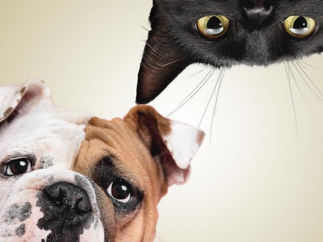 Você conhece a diferenças de cães e gatos?