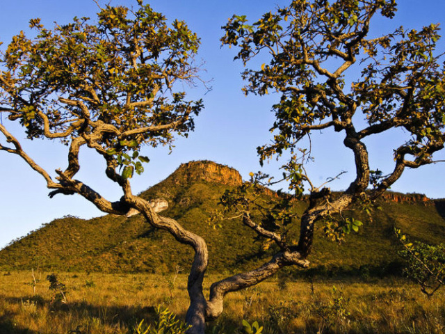 O quanto você conhece o bioma Cerrado?