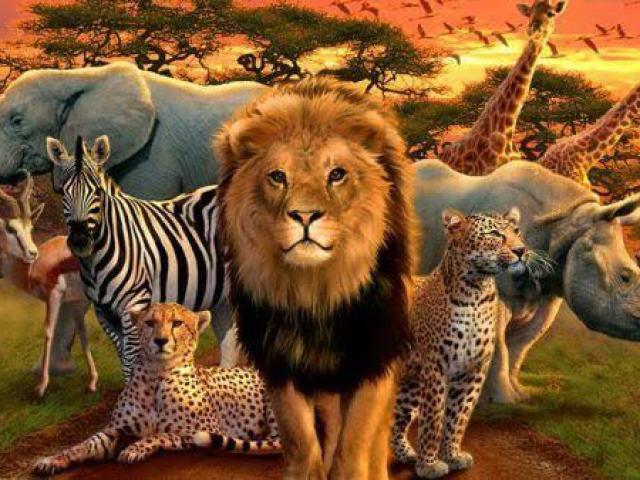 Com qual animal você se identifica?