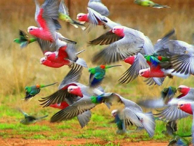 Você conhece os pássaros?