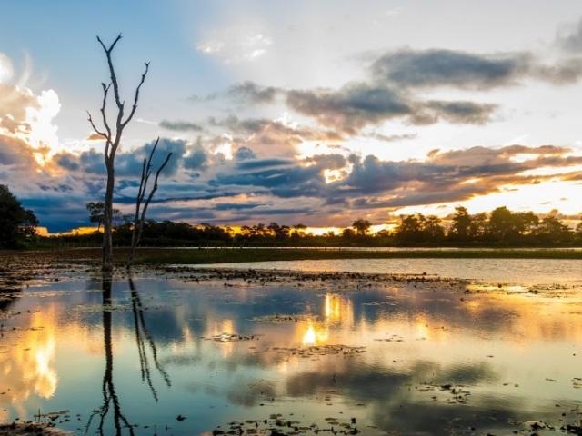 O quanto você conhece o bioma Pantanal?