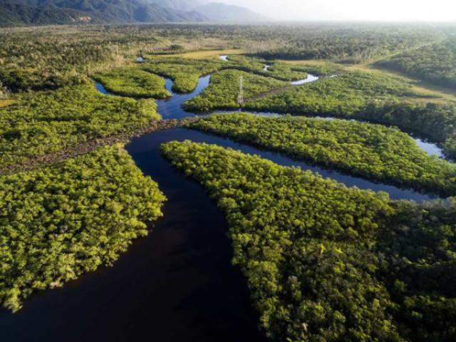 O quanto você conhece o Bioma Amazônia?