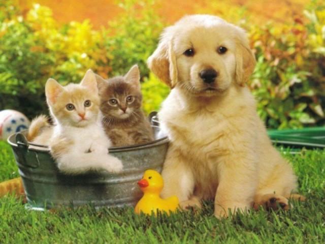 Gatos e cães: Mito ou verdade?