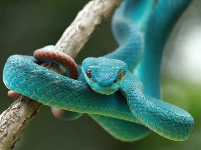 Será que você entende sobre serpentes?
