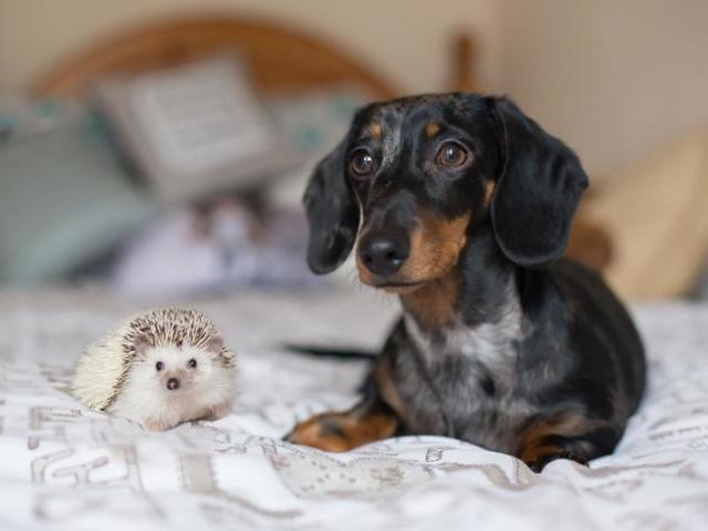 Qual animal de estimação combina com você?