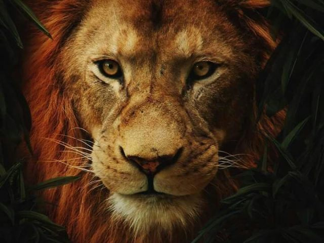 Qual Leão ou Leoa você seria em o Rei Leão?
