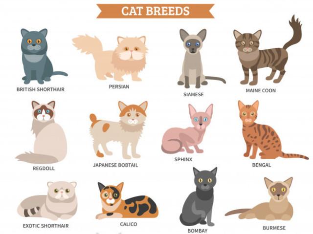 Qual raça de gato você deveria ter?