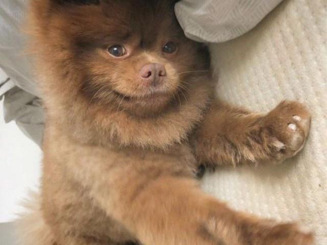 Qual a raça de cachorro perfeita para você? (porte pequeno)