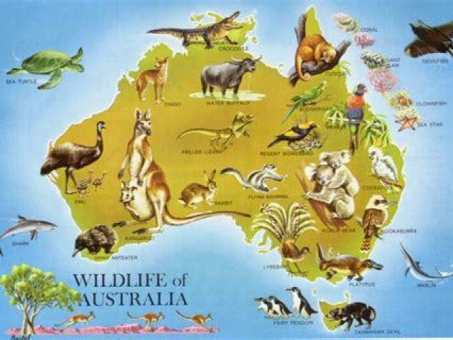 Você realmente conhece conhece os animais australianos?