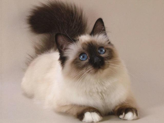 Qual gato seria ideal pra você?