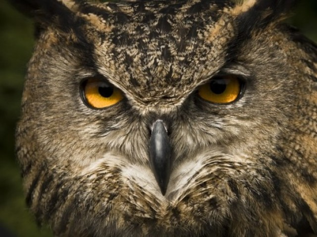 Você possui a visão de qual animal?