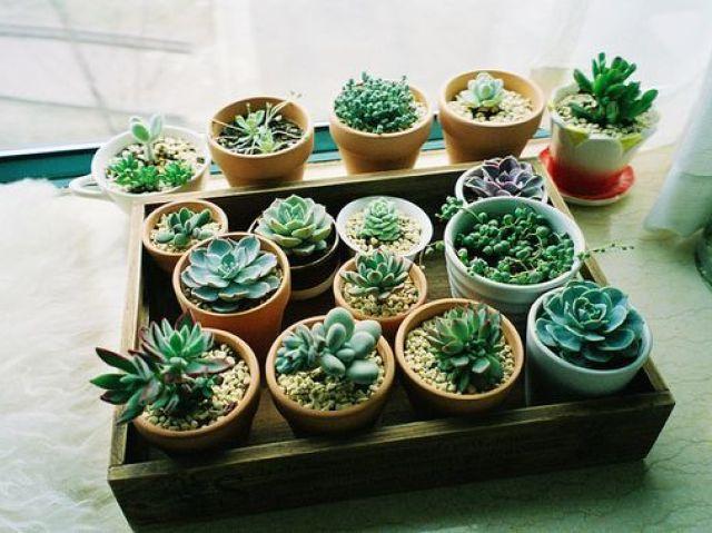 Teste sobre as plantas!
