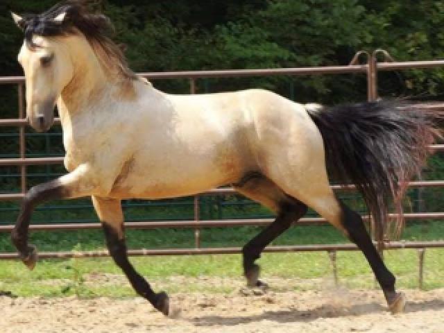 Você sabe quais são as raças de cavalos a seguir?