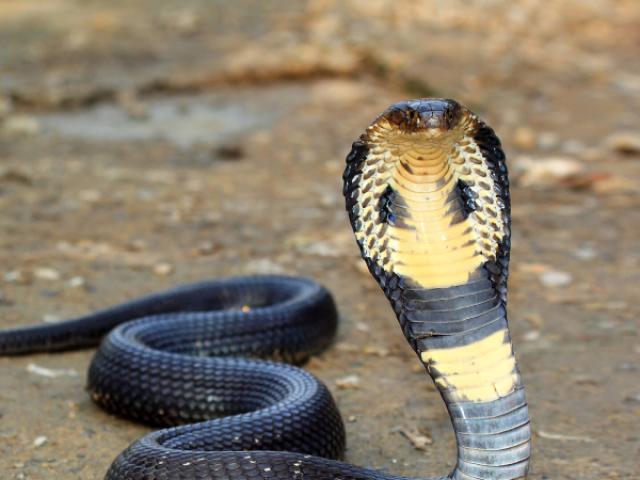 Será que você consegue acertar qual é a cobra pela a imagem?