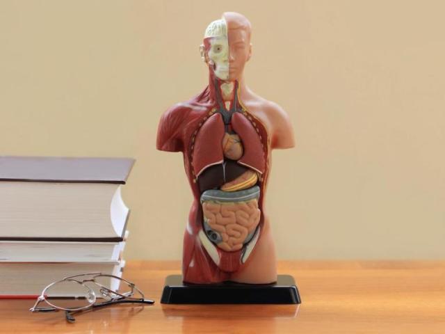 Mitos e Verdades sobre o Corpo Humano!