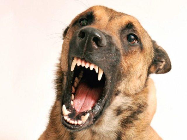 Em qual animal você se transformaria na hora da raiva?