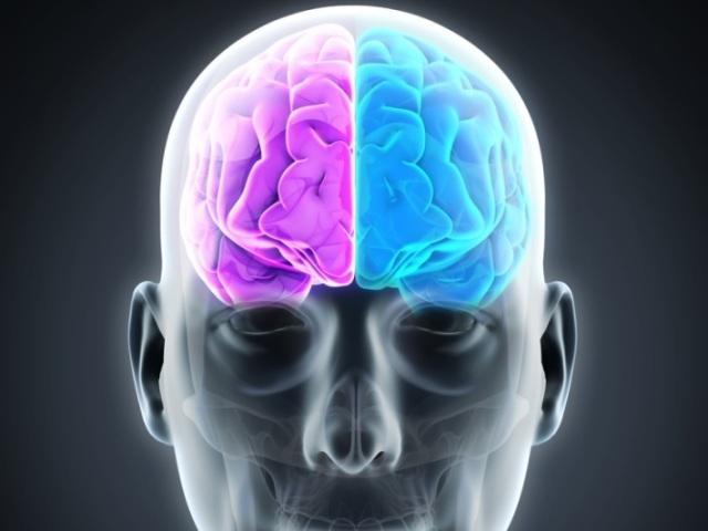 Qual lado do seu cérebro que você mais usa?