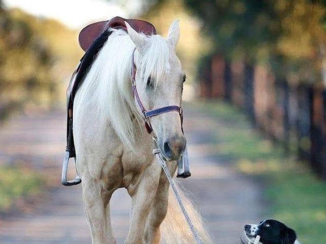 Você conhece cavalos?