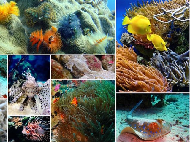Qual animal marinho te define?