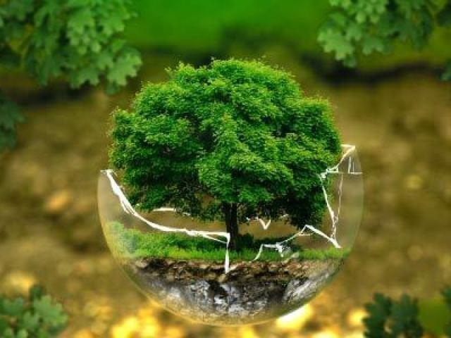O quanto você sabe sobre ecologia?