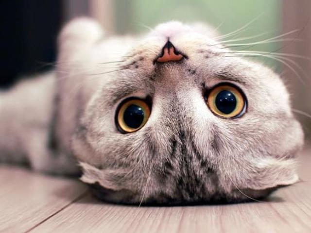 Qual felino mais combina com a sua personalidade?