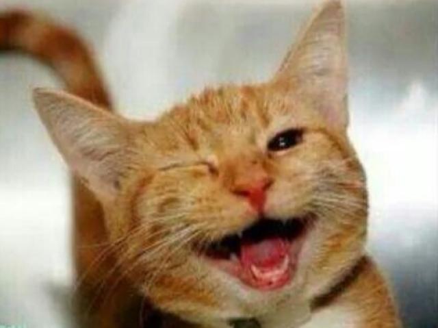 Que gato meme combina com você?