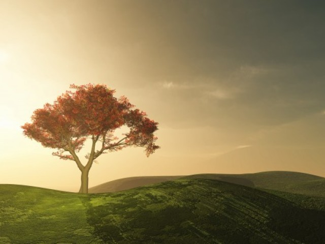 Qual árvore mais combina com você?