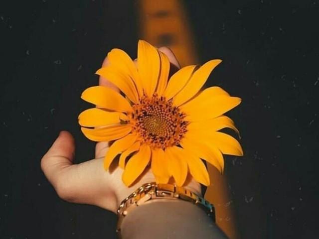 •|Monte um dia da sua vida|•💖